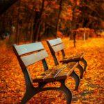 odzież męska na jesień